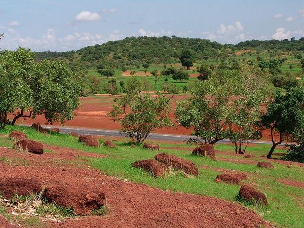 800px Sahel forest near Kayes Mali