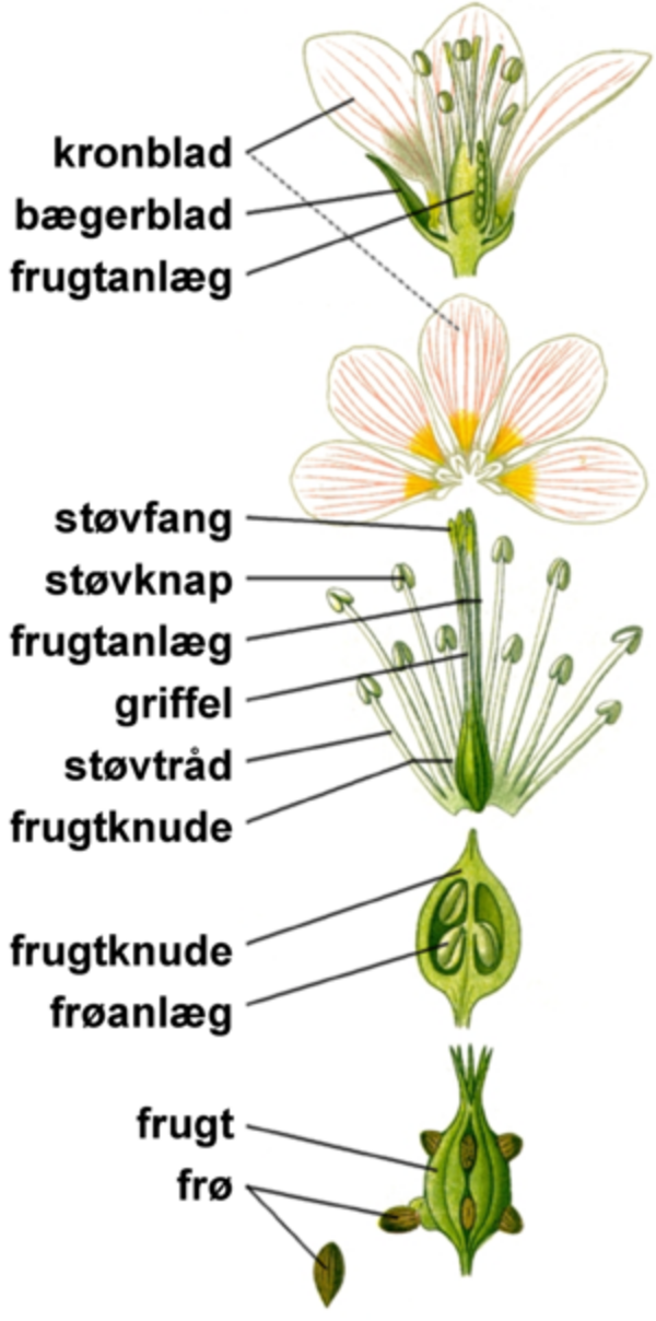 300px Blomstensdele