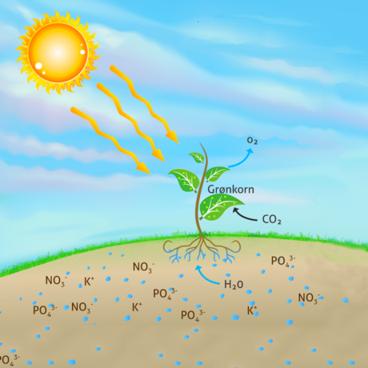 Planters optagelse af næringsstof