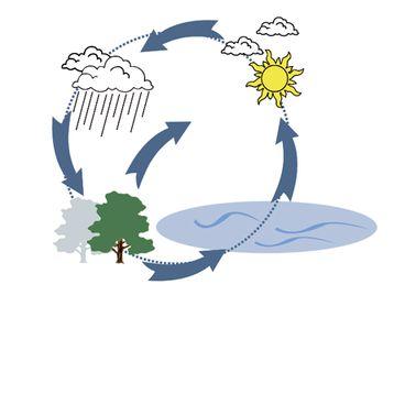 Vandets kredsløb biologi